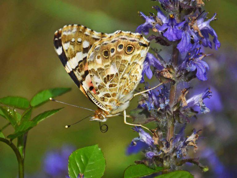 Schmetterling Martin Keller